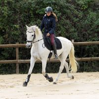 dressage zeus - Copie
